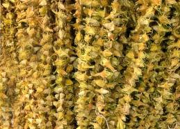 Kuru Çiçek Bamya 500 gr